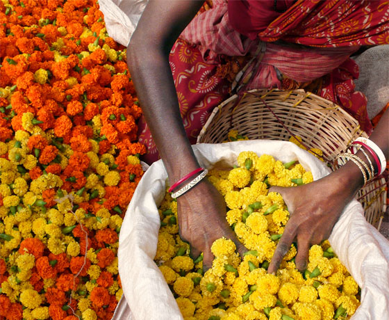 Marigold flowers at the flower market in Jaipur, Rajasthan