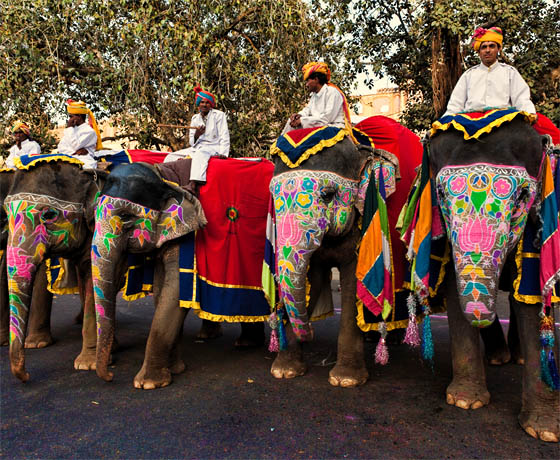 A herd of decorated elephants during the Jaipur Virasat festival