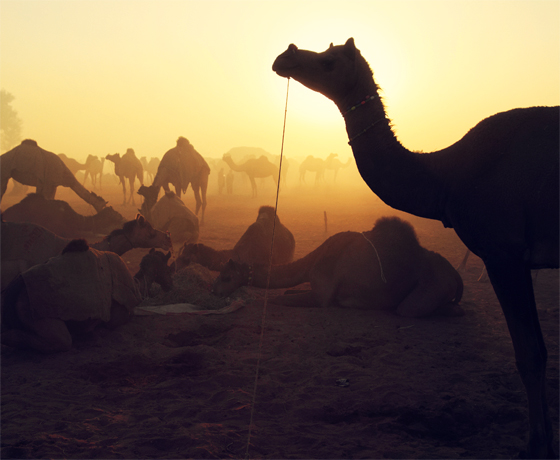 Scenes from the fascinating Camel Fair in Pushkar
